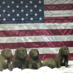 Chesapeake pups Facebook 3-D Retrievers & like
