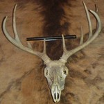 Whitetail Deer Antlers and Elk skin rug