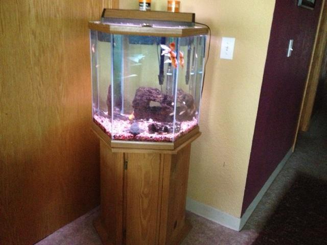 30 gallon octagon fish tank 35 gal octagon fish tank for Hexagon fish tank with stand