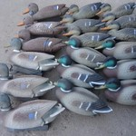 18 duck decoys