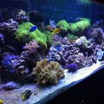 185 Gallon Complete Saltwater Reef Aquarium