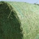 Alfalfa Round bales in Dodge City, Ks