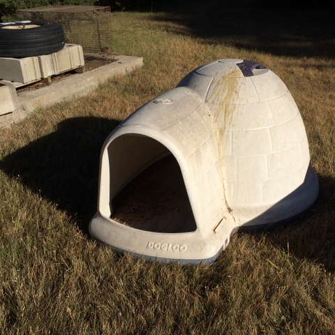 Igloo Dog Houses