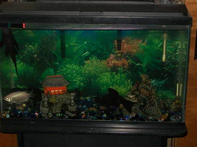 29 gallon fish tank nex tech classifieds for 29 gallon fish tank