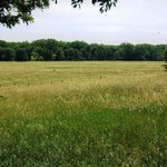 Got Pasture to Rent or Purchase? How about Cultivated land??