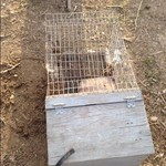 Rabbit cages with nest box