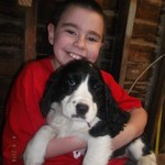 AKC English Springer Spaniel Puppies