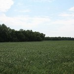 Jewell Co Farmland - 240 +/- Acres