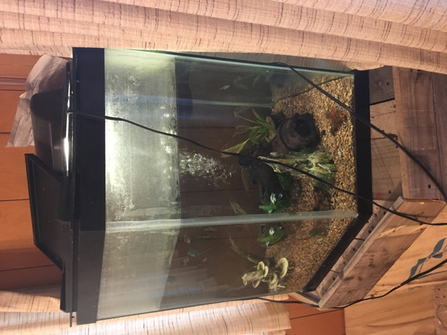 55 gallon corner fish tank pioneer classifieds for 55 gallon corner fish tank