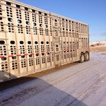 2-08 Wilson 48X102 Cattle Trailers.