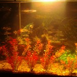 40 or 45 gallon tank with fish,deco.,& accessories