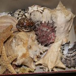 Sea Shell & Rock Collection