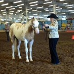 Show Stopper Palimino Paint Gelding