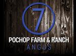 Pochop Farm & Ranch Angus logo