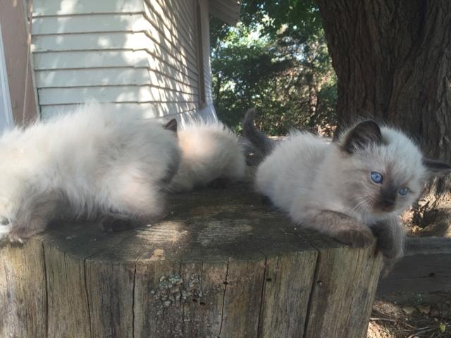 worlds best cat litter walmart